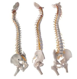 Benefits of NUCCA chiropractic in Calgary